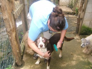 Crystal grooming a one-eyed dog at AWARE. Guatemala.